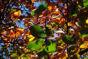 Leaves of Summer